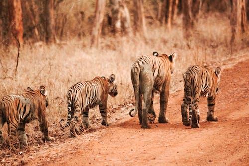 hayvan, hayvan fotoğrafçılığı, hayvan parkı, hayvan sever içeren Ücretsiz stok fotoğraf