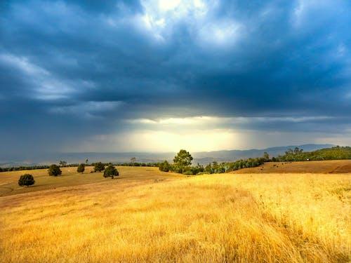 사천에 밀밭, 아디스 아바바, 에티오피아, 엔토토 산맥의 무료 스톡 사진