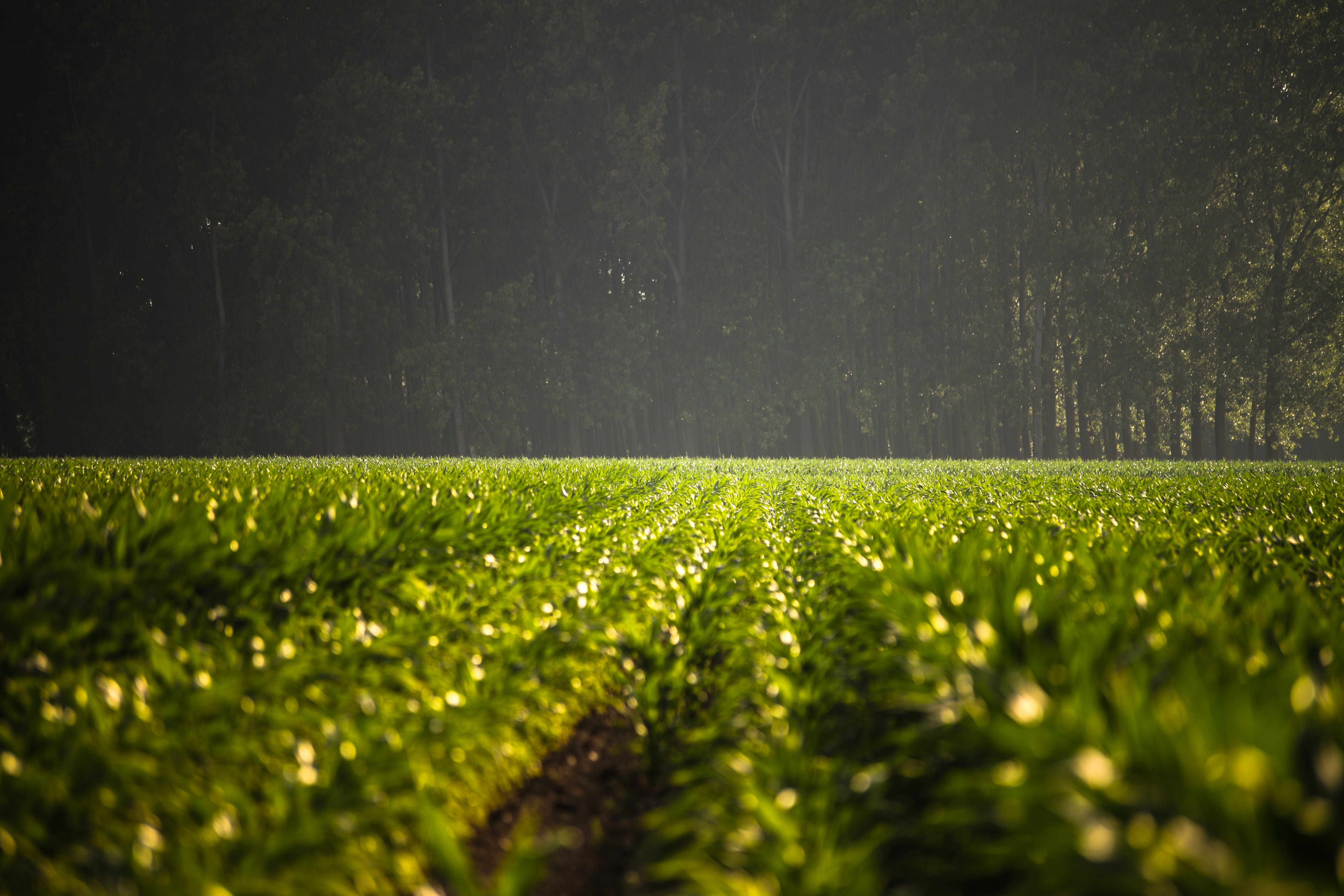 Green Leafed Plant Field