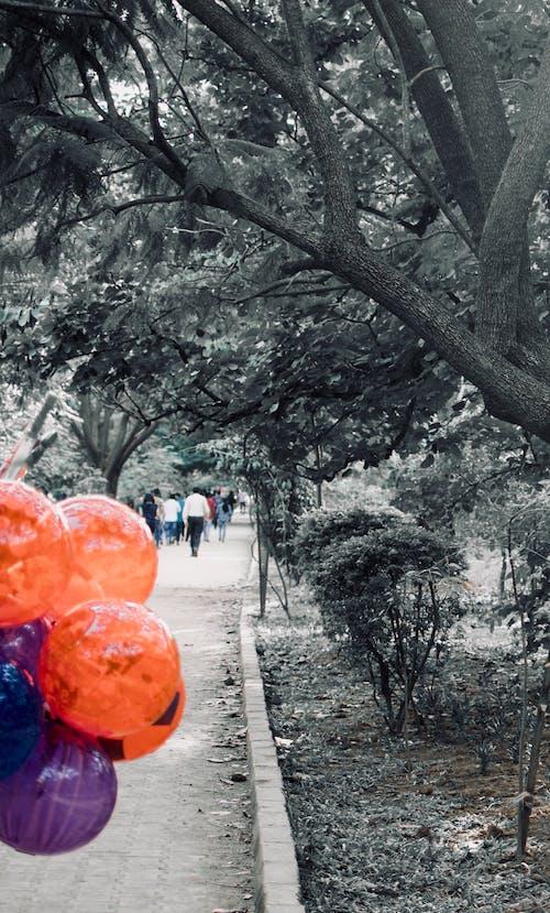 Photos gratuites de ballon, bonheur, parc, silence