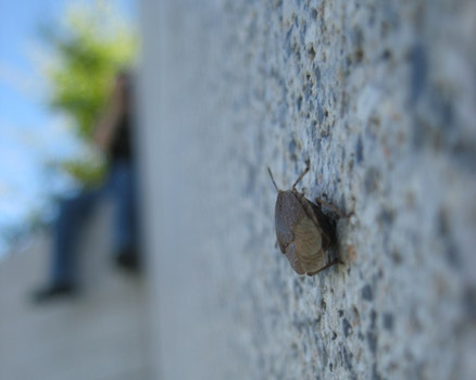 Free stock photo of wall, focus, bug, bug on a wall