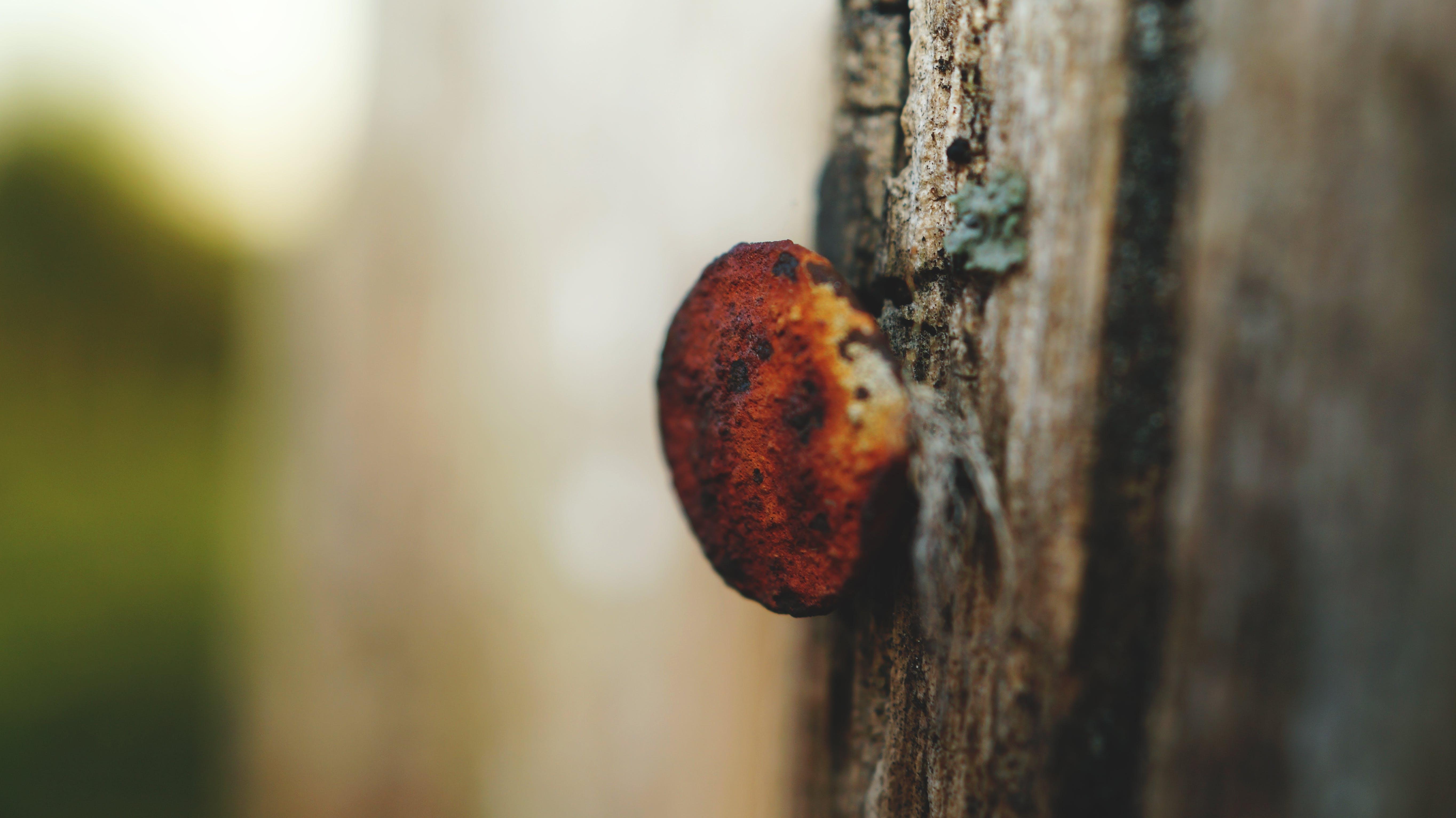 Free stock photo of nail, rusty
