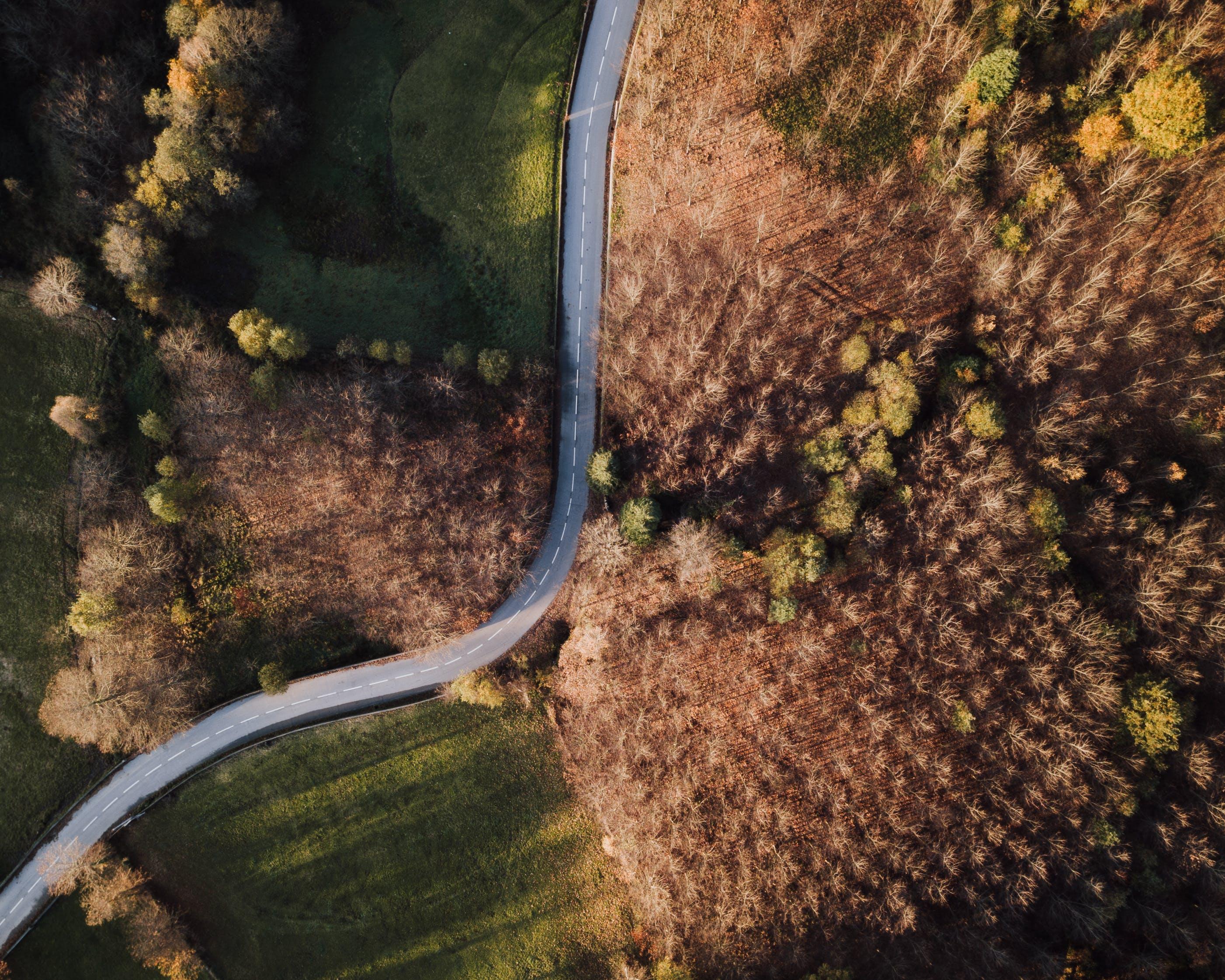 Безкоштовне стокове фото на тему «аерознімок, Денне світло, дерева, дорога»