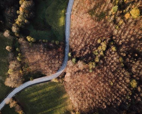 Kostnadsfri bild av dagsljus, fågelperspektiv, färger, gräs