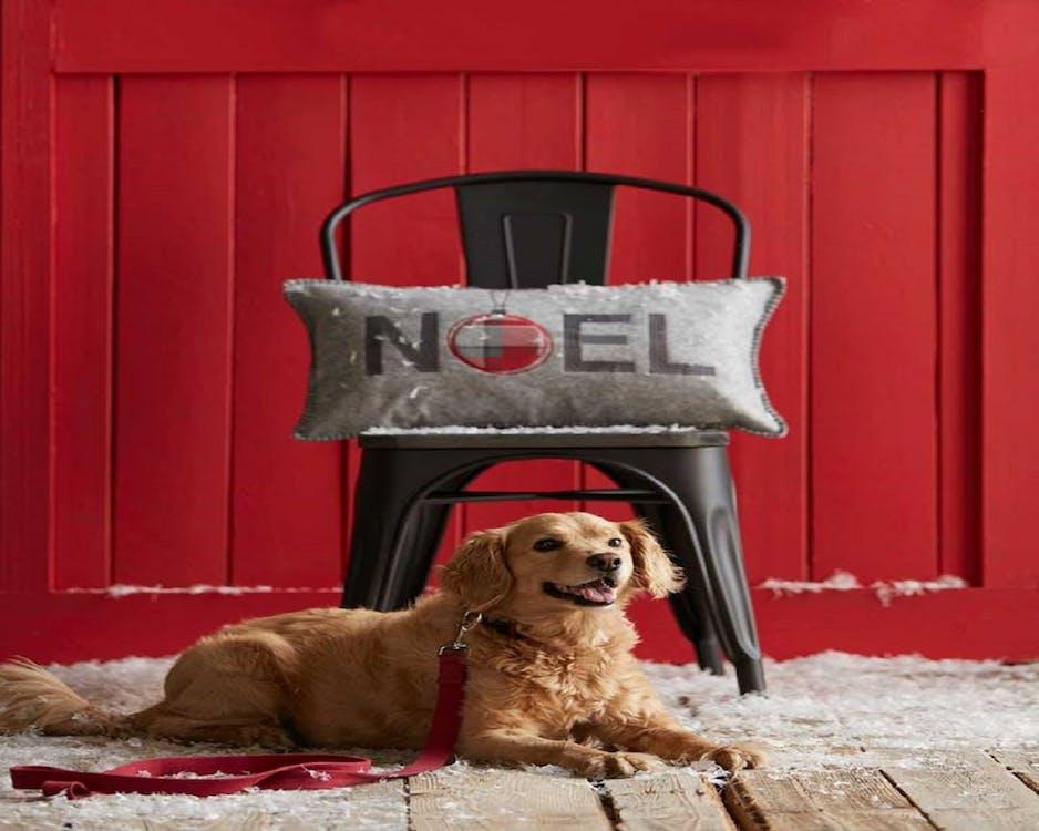 cushion, dog