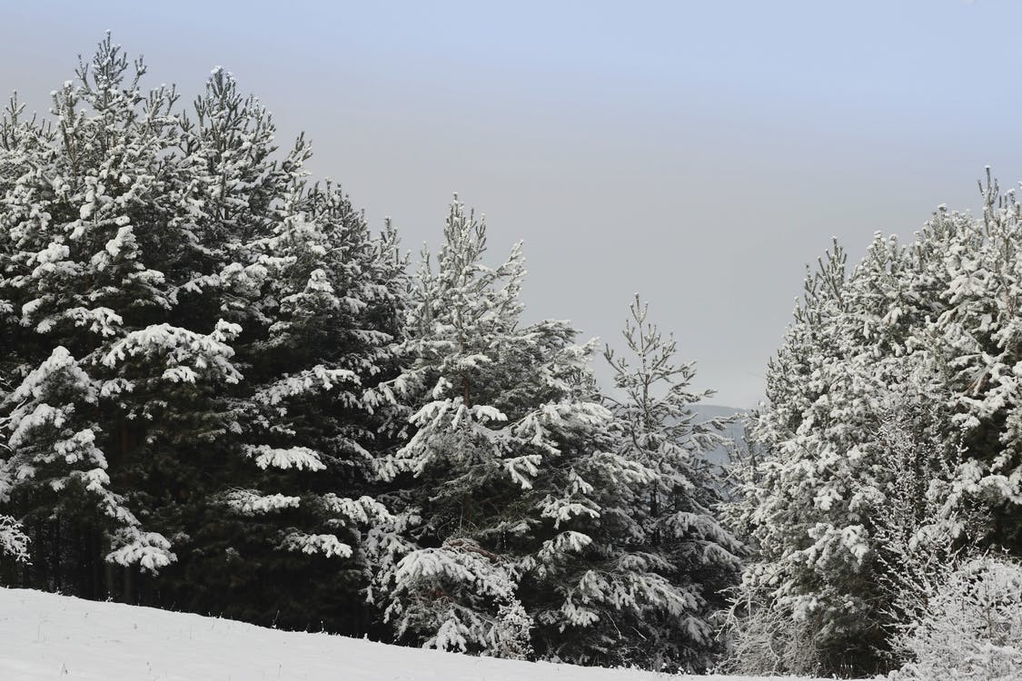 country, forest, snow