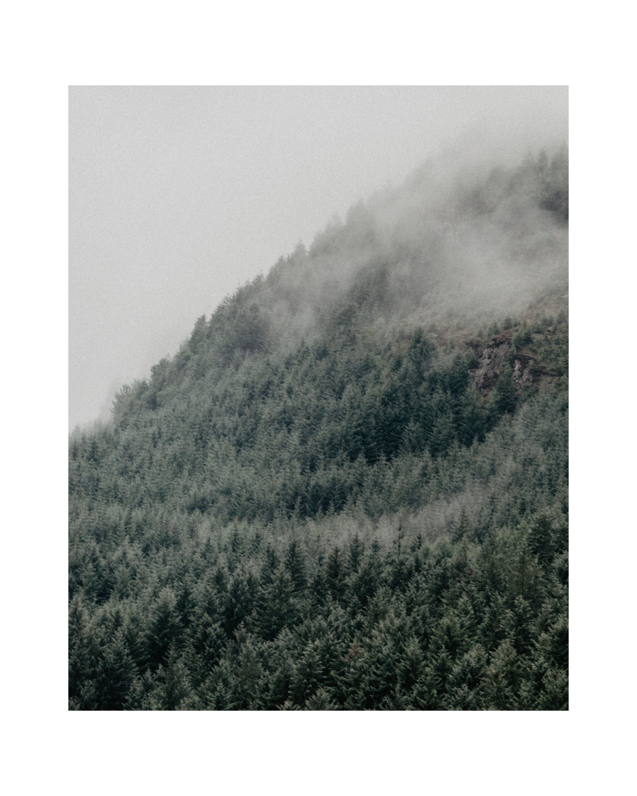 Free stock photo of cloudy sky, dark green, foggy, forest