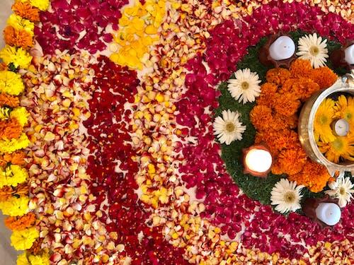 Gratis arkivbilde med blomsterarrangement, diwali, ringblomst, roseblader