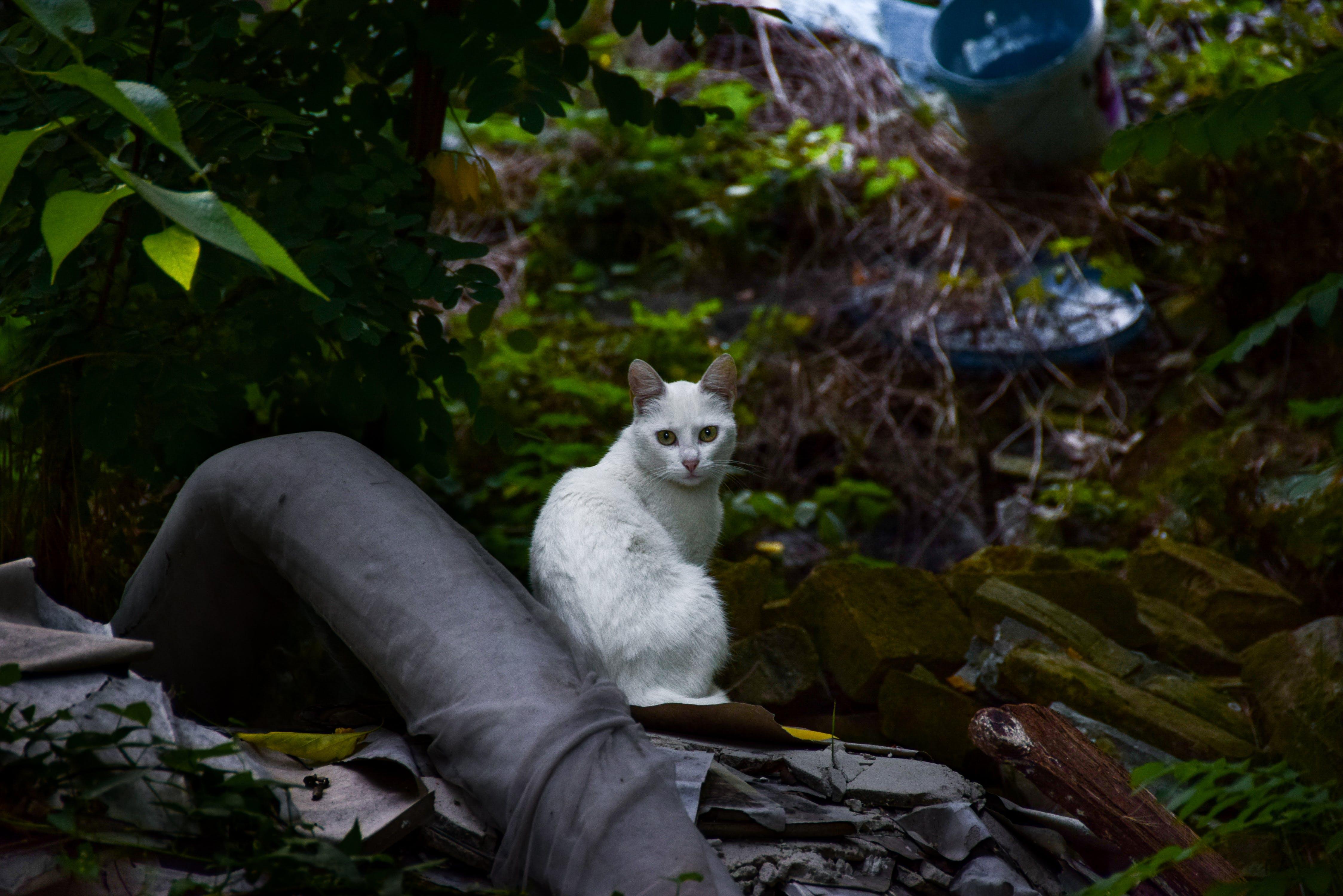 White Short Fur Cat