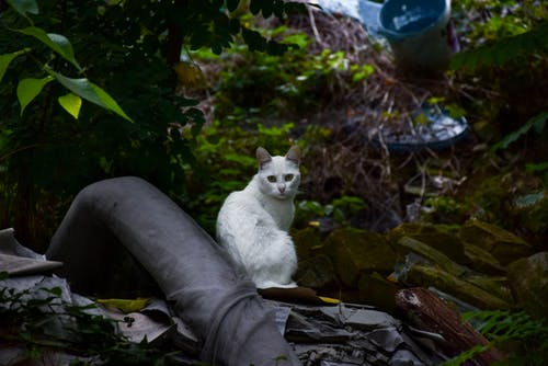 Witte Korte Vacht Kat