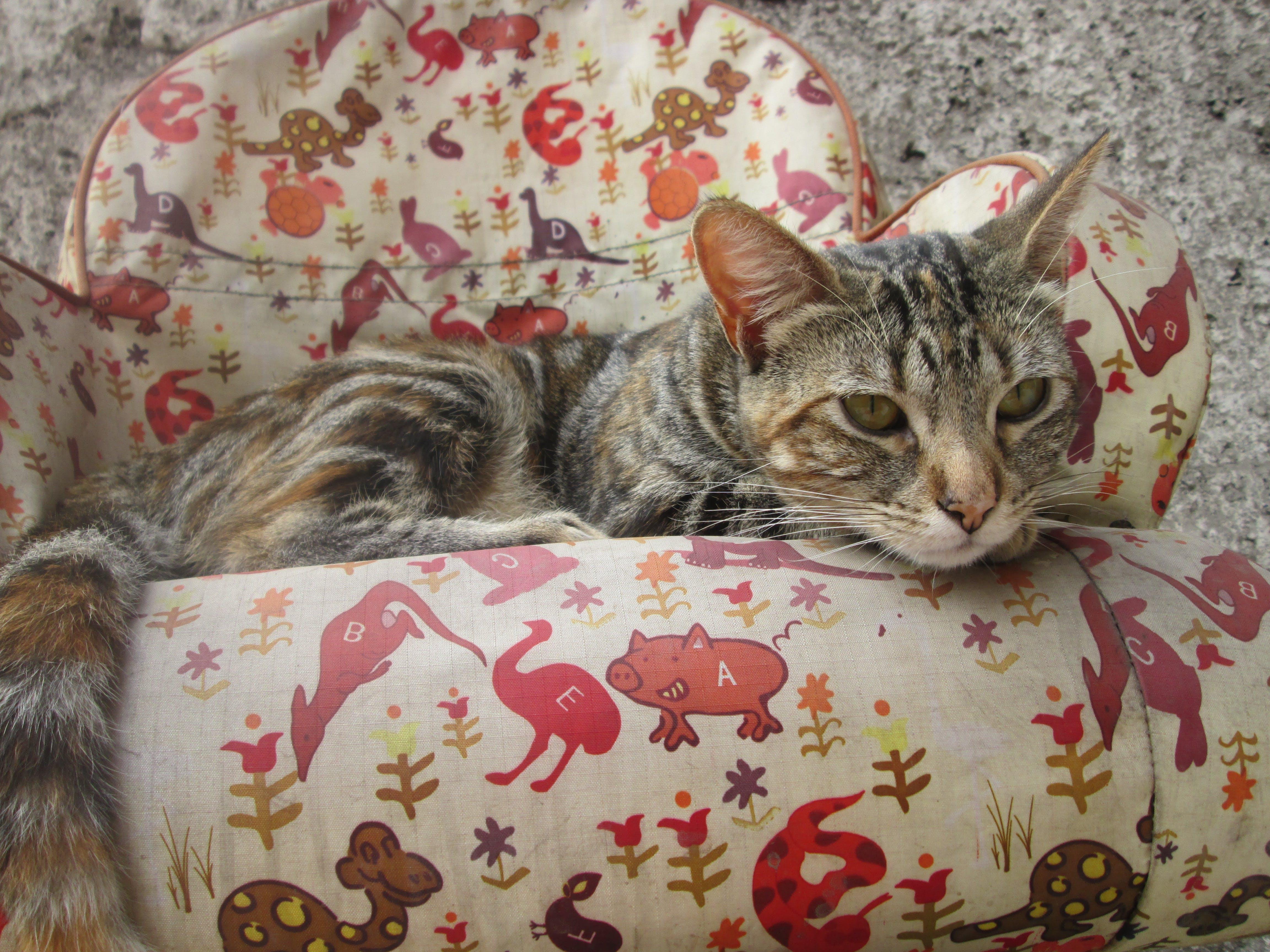 Kostenloses Stock Foto zu gatito, kätzchen