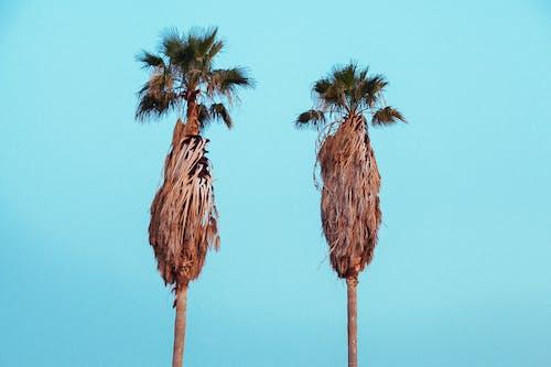 Kostenloses Stock Foto zu aufnahme von unten, bäume, blauer himmel, ferien