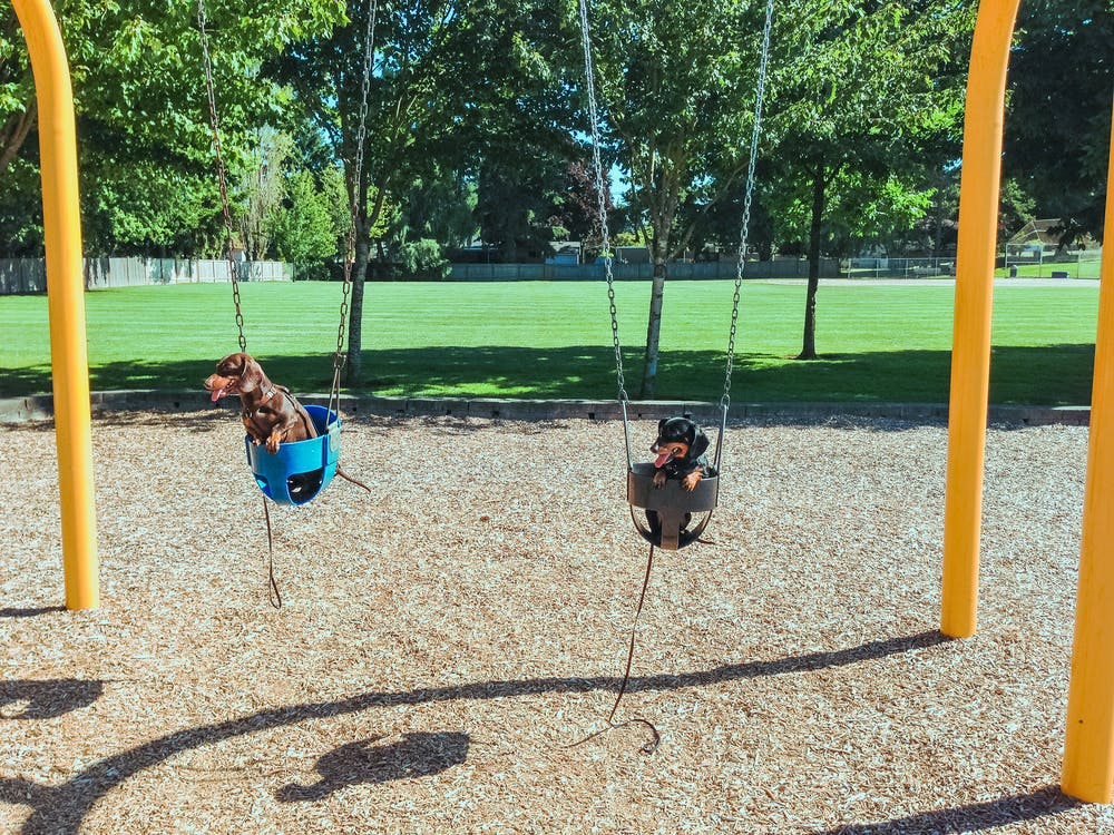 Black, Yellow, and Green Swing