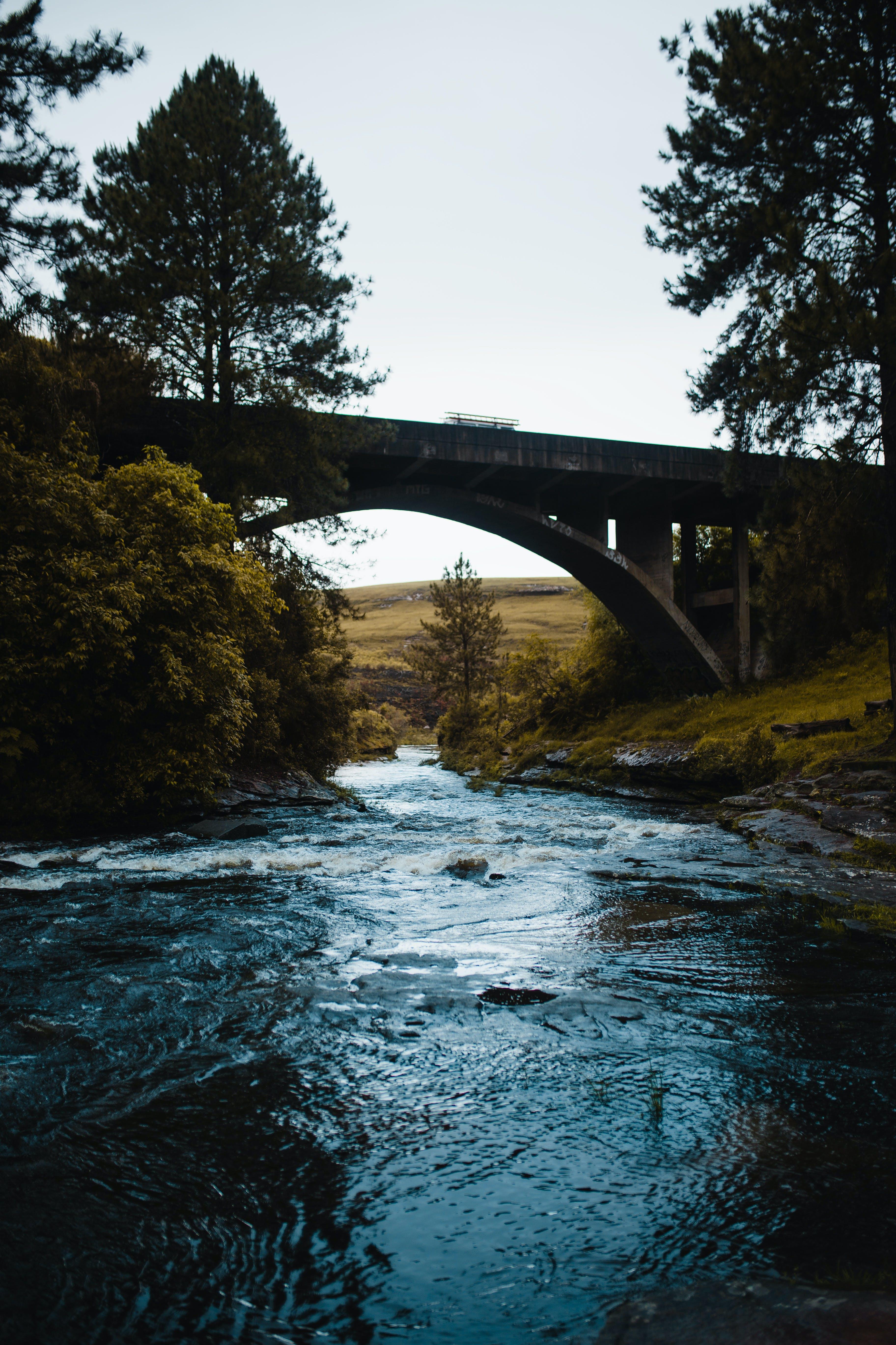 คลังภาพถ่ายฟรี ของ กระแสน้ำ, กลางวัน, การพักผ่อนหย่อนใจ, ต้นไม้