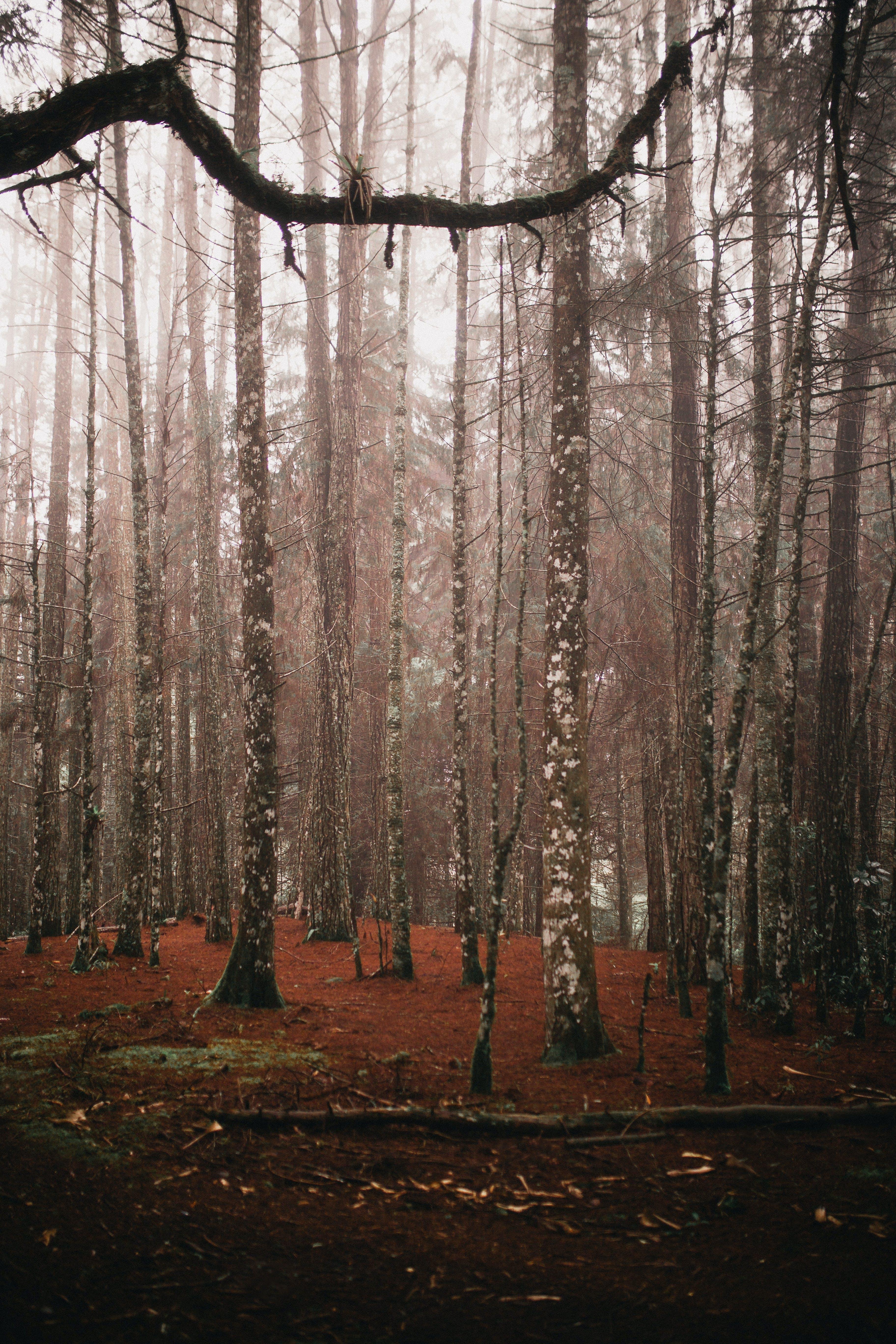 Ingyenes stockfotó ág, csupasz fa, évszak, fák témában