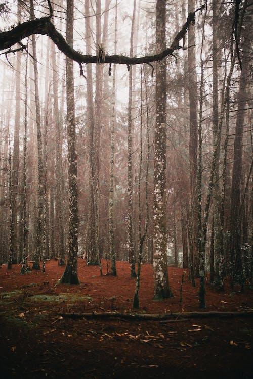 Kostnadsfri bild av dimma, dimmig, gren, gryning