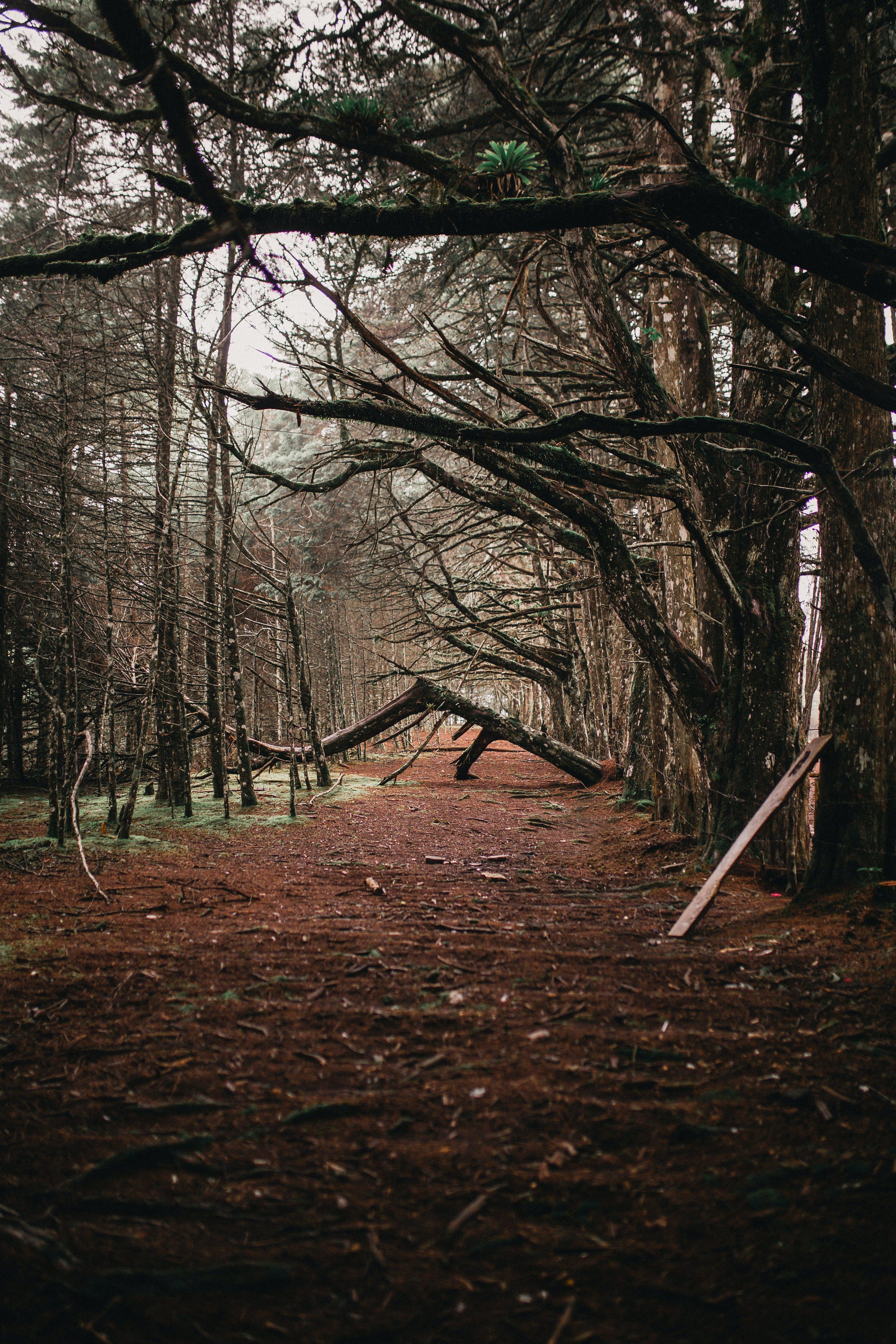 小径, 木, 枝, 森の中の無料の写真素材