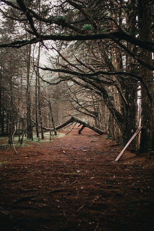 分支機構, 森林, 樹木