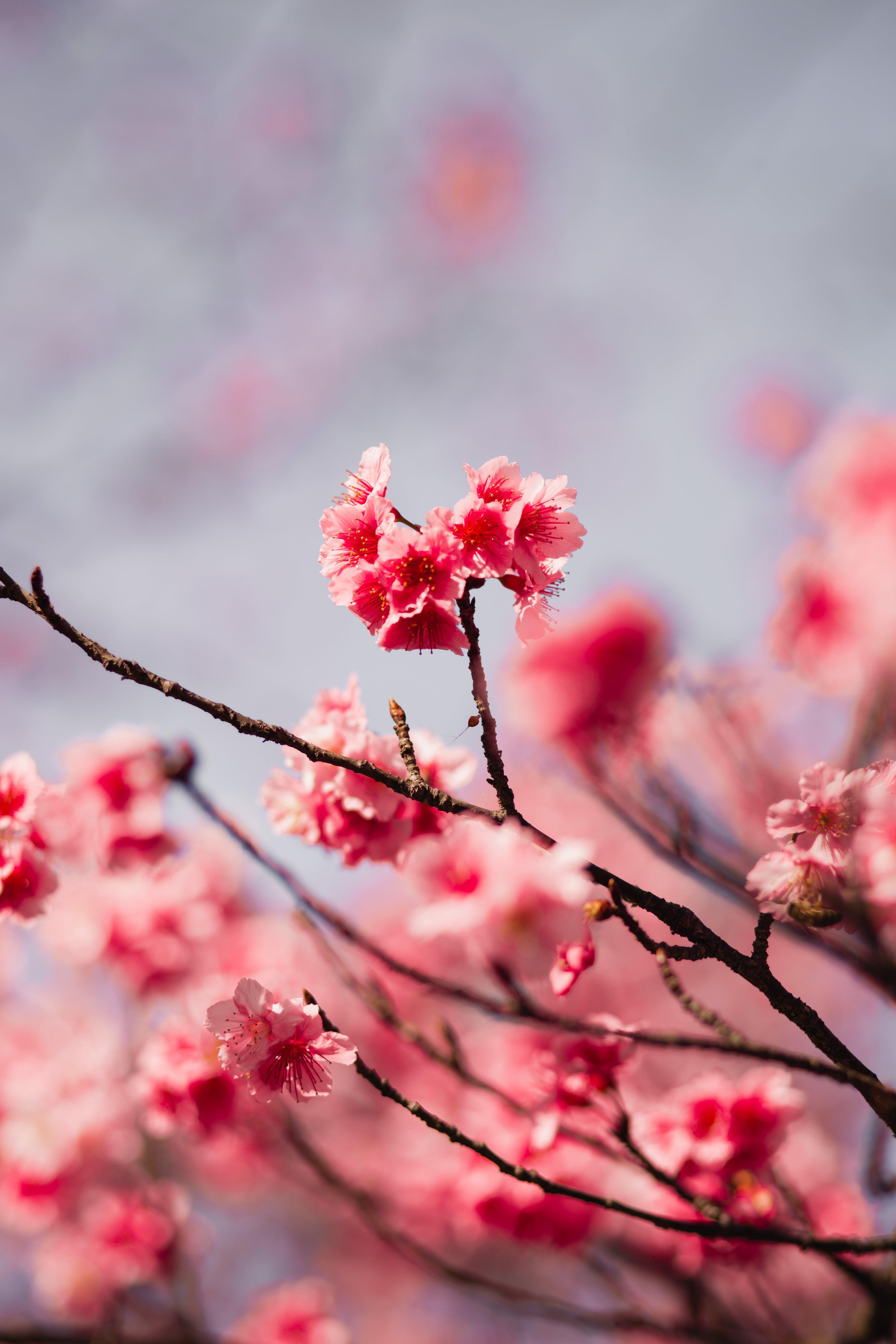 Gratis lagerfoto af blomster, flora, gren, kronblade