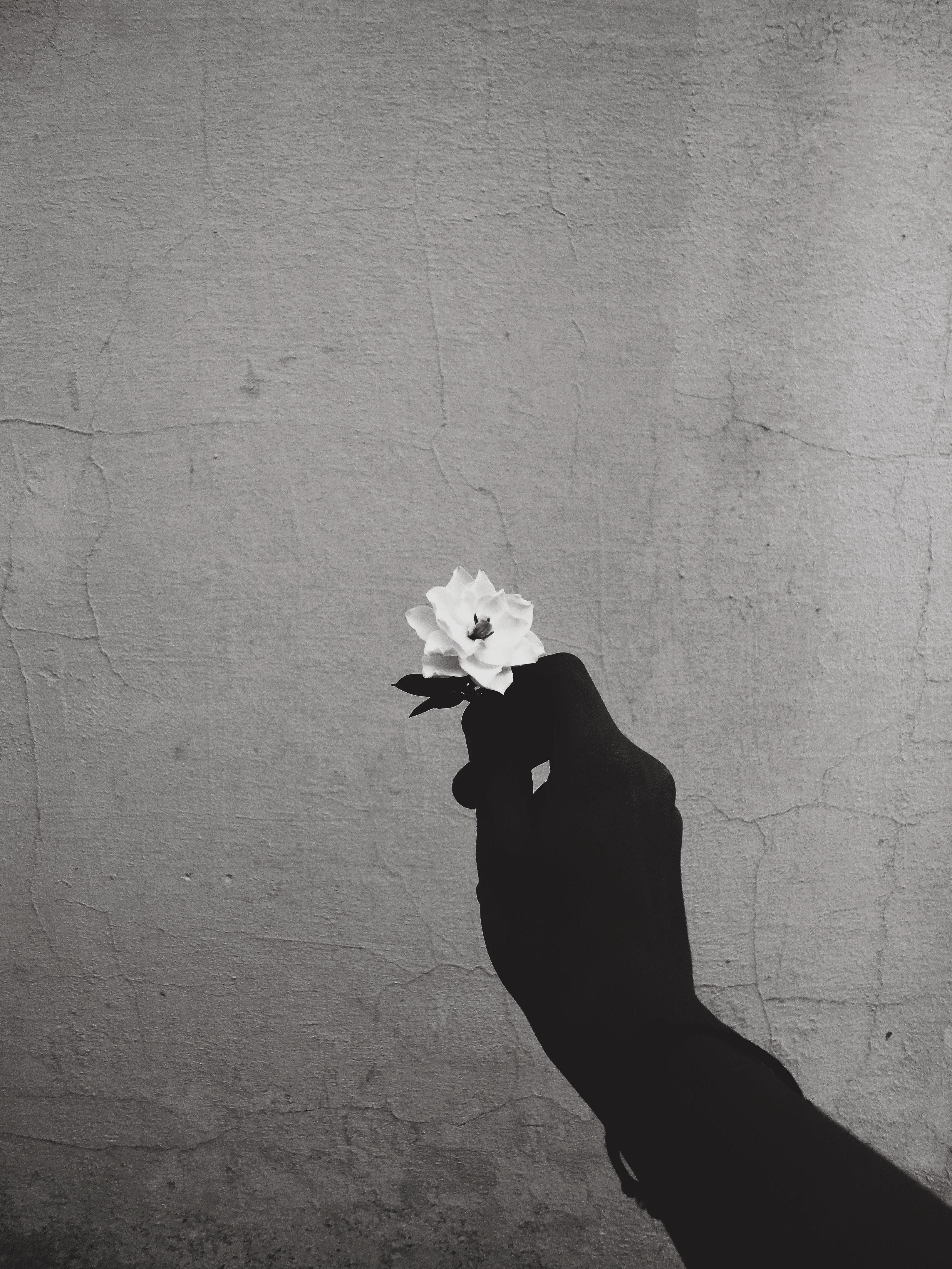 Foto Stok Gratis Tentang Bayangan Hitam Bunga Dinding