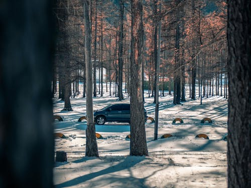 Free stock photo of car, forest, harrier, toyota