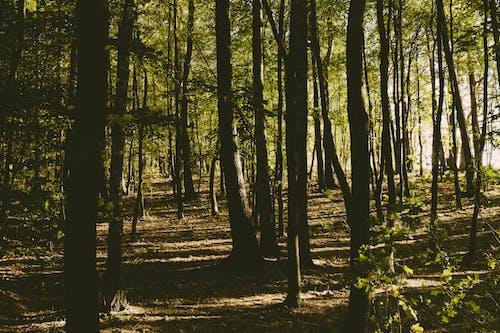 Darmowe zdjęcie z galerii z cień, drzewa, dzicz, idylliczny
