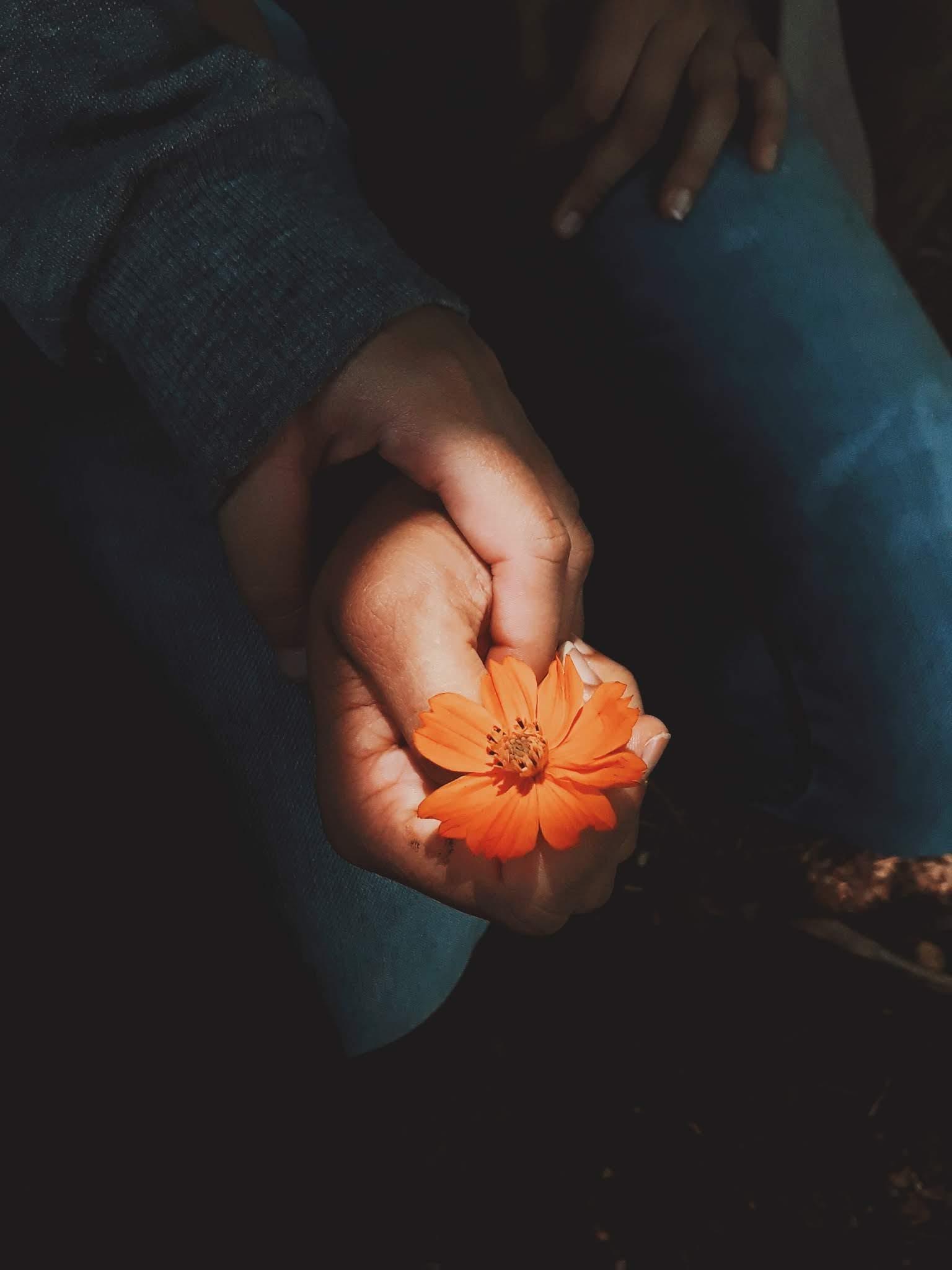 Photo of Orange Cosmos Flower