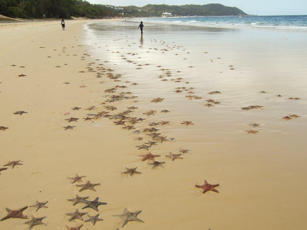 Free stock photo of starfish beach