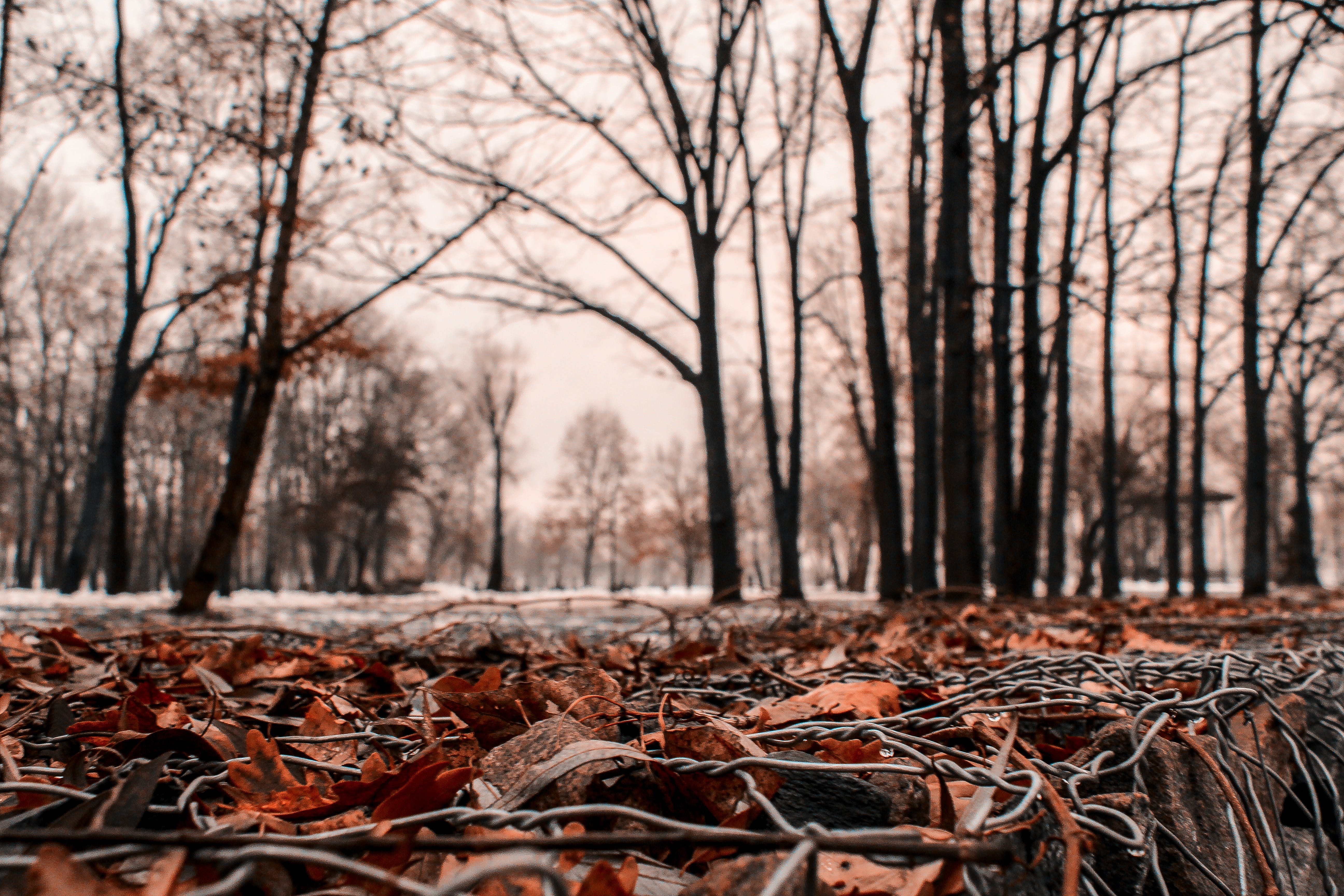 Selective Focus Photo of Withered Leaves on Ground