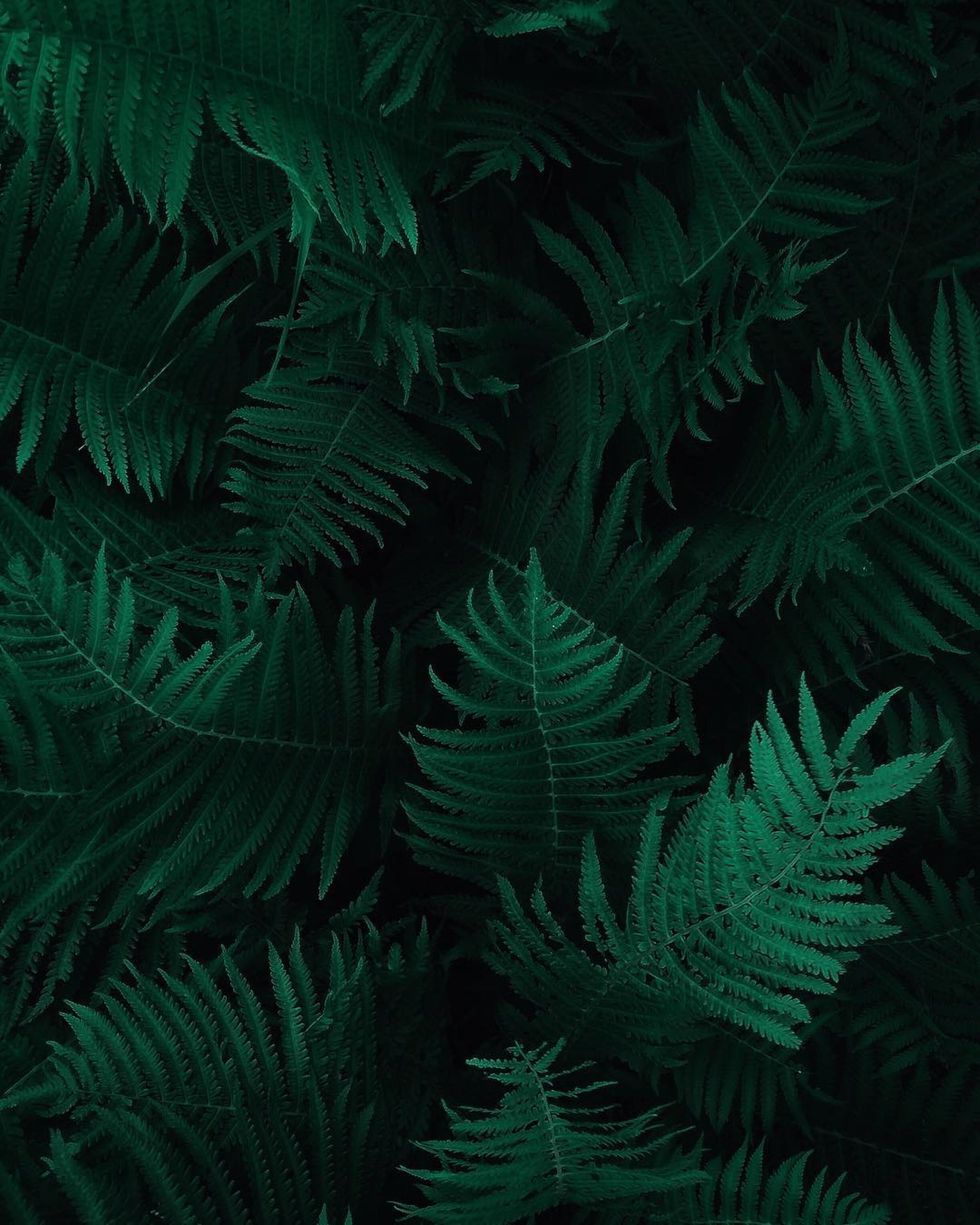 Photo of Green Fern Leaves