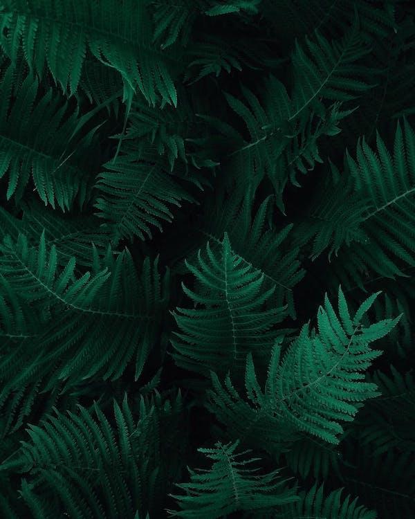 Photo of Green Fern Leaves