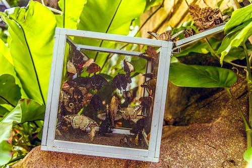 Δωρεάν στοκ φωτογραφιών με rock, ανάπτυξη, γκρο πλαν, έντομα