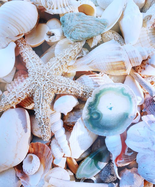Free stock photo of beauty in nature, by hand, seashells, summer