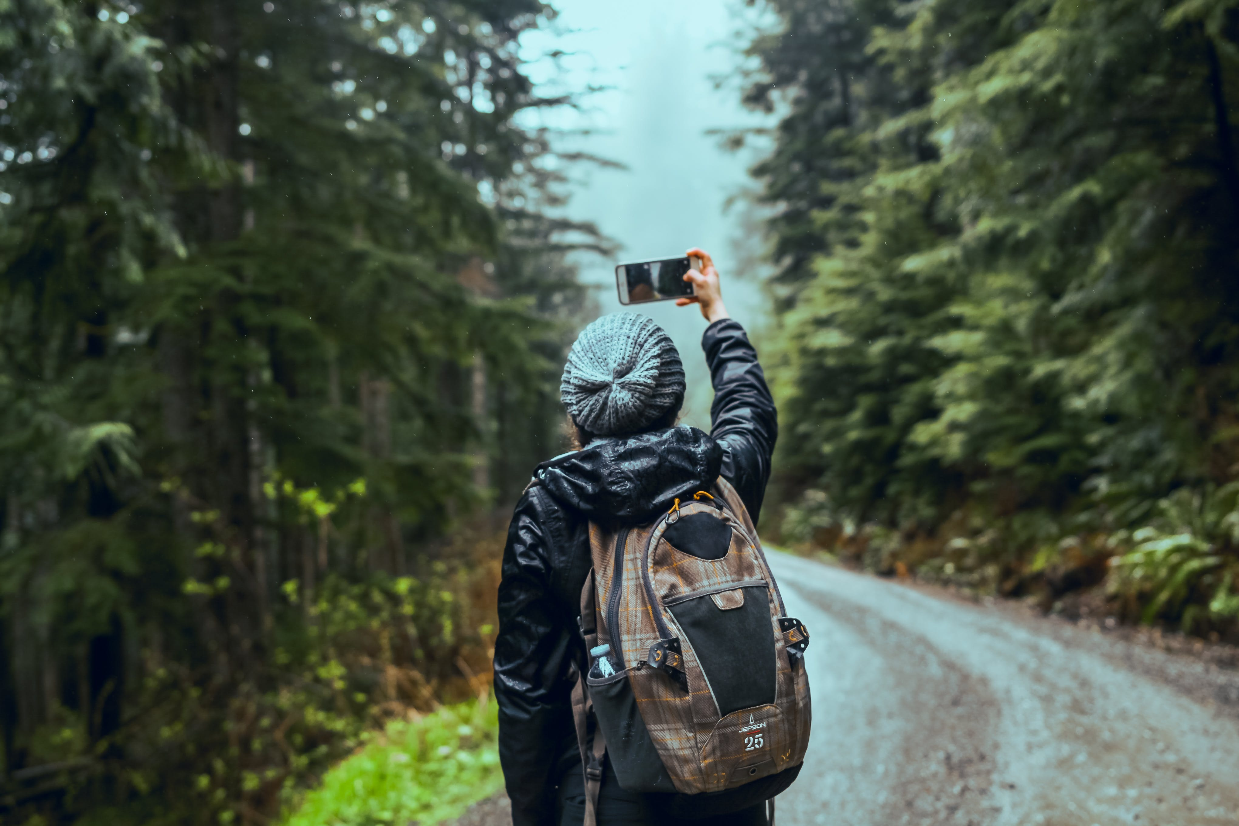 Person Taking Photo Of Pine Trees