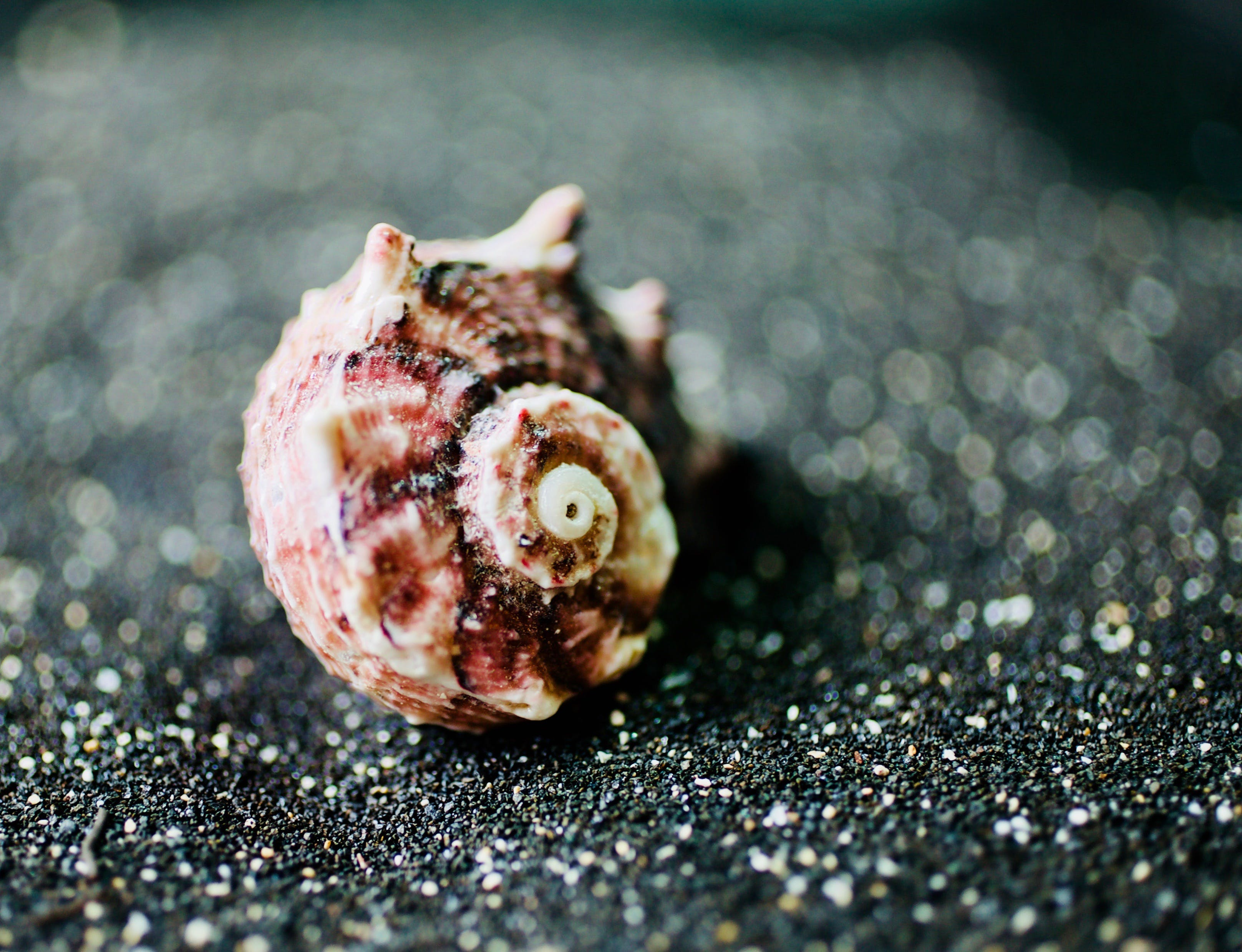 Close-up Photo of Seashell