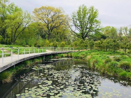 Kostenloses Stock Foto zu botanik, botanischer garten, botanischer garten in brooklyn, brücke