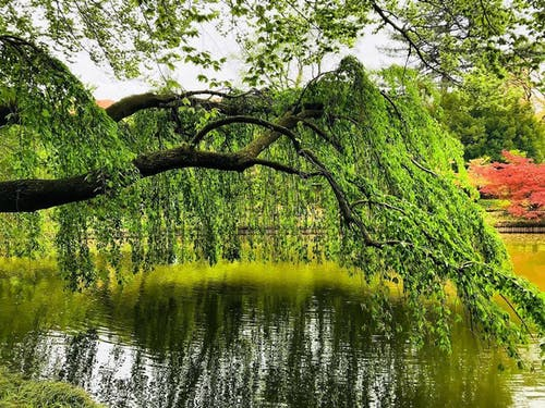 Kostenloses Stock Foto zu baum, blumen, botanik, botanischer garten in brooklyn