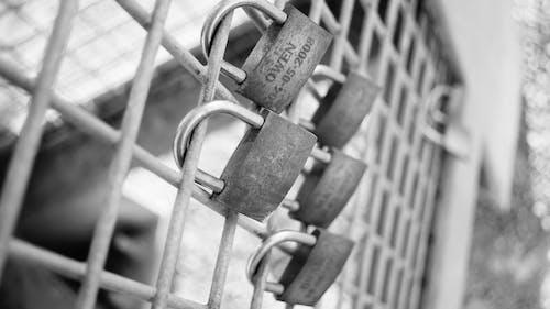 Free stock photo of padlocks