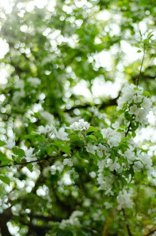 Ảnh lưu trữ miễn phí về hoa, màu xanh lá