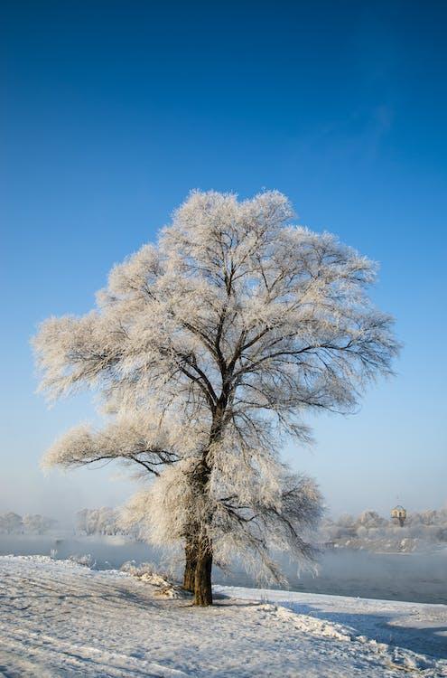 albero, congelando, congelato