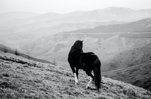 Monochrome Photography of Horse On Grass