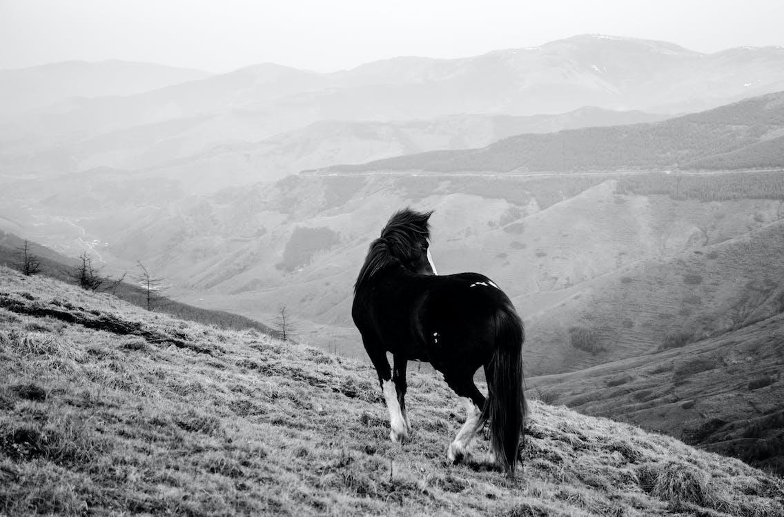 černobílý, fotografování zvířat, hory