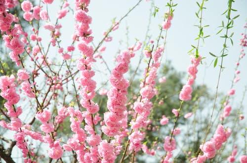Ảnh lưu trữ miễn phí về ánh sáng ban ngày, cận cảnh, cánh hoa, hệ thực vật