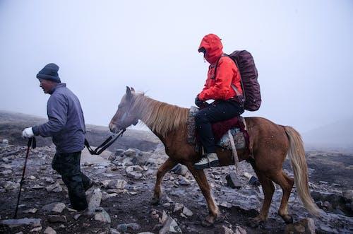 남자, 레저, 말, 모험의 무료 스톡 사진