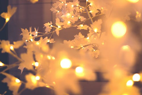 Free stock photo of christmas, lights, tree, xmas