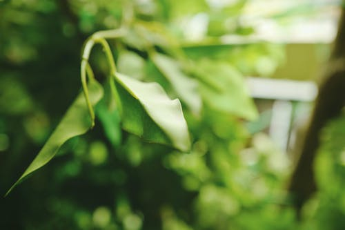 Gratis lagerfoto af grøn, makro, plante, vækst