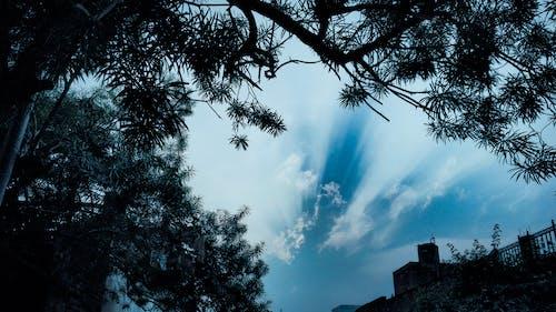 ağaç, Akşam gökyüzü, bulut görünümü, bulut oluşumu içeren Ücretsiz stok fotoğraf