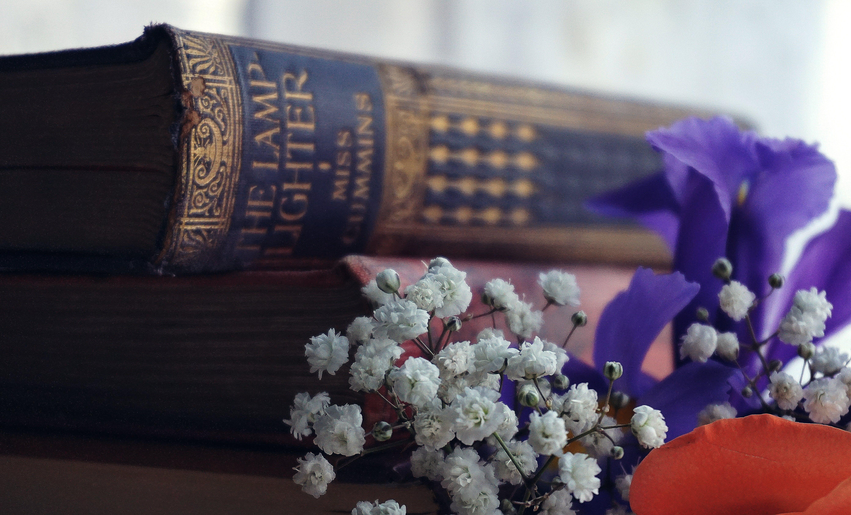 White Chrysanthemum Flowers Near Books