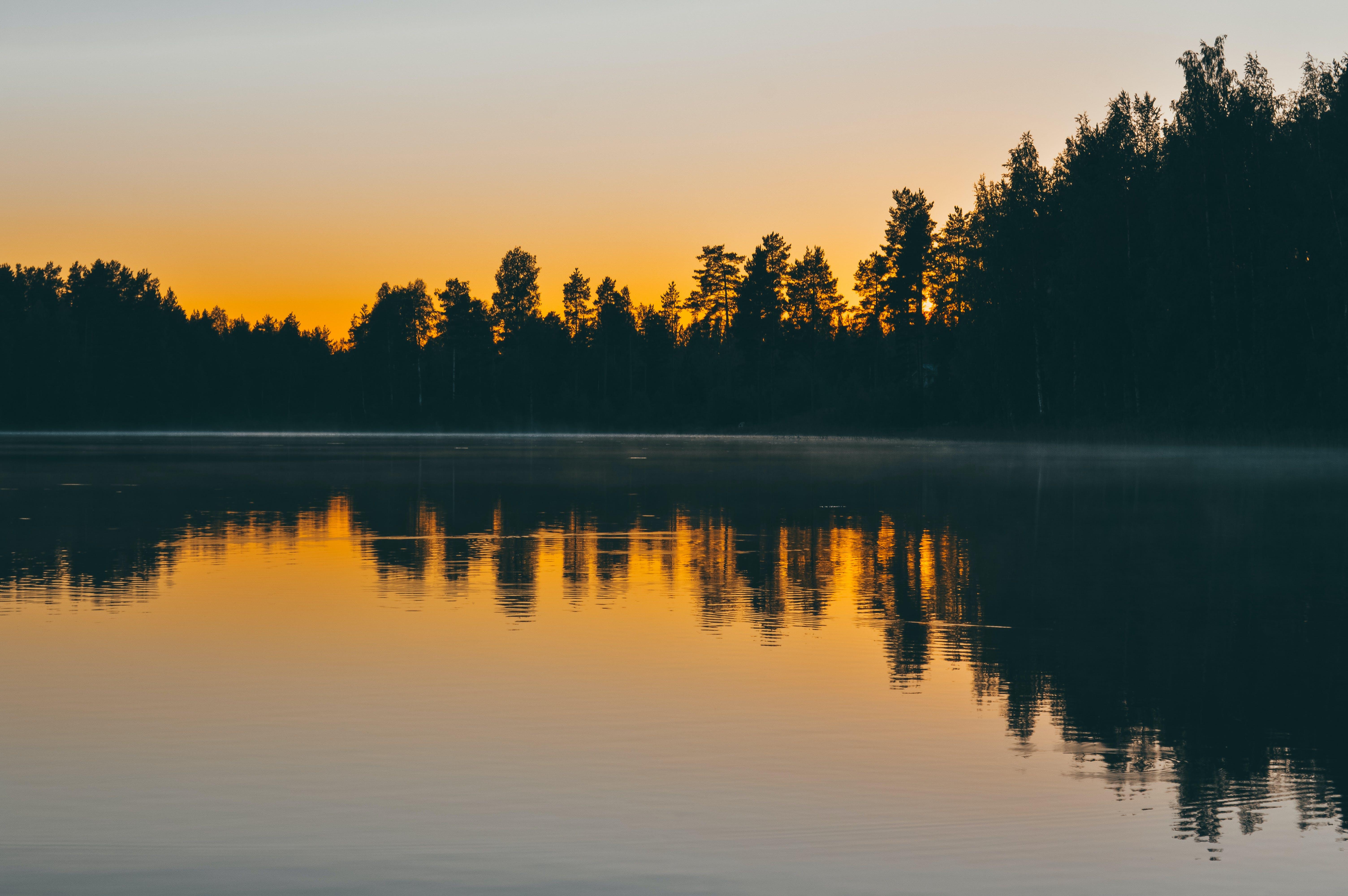 alba, arbres, capvespre