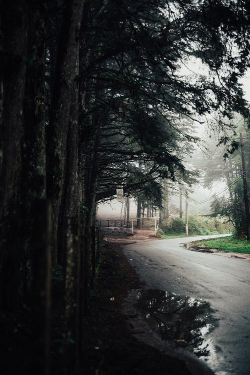 Empty road after rain in forest